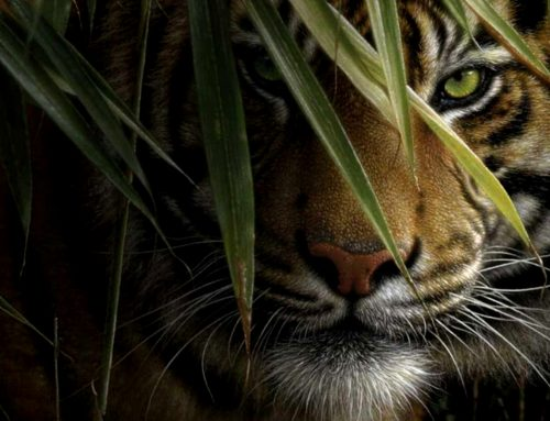Survival Instincts in the Corporate Jungle